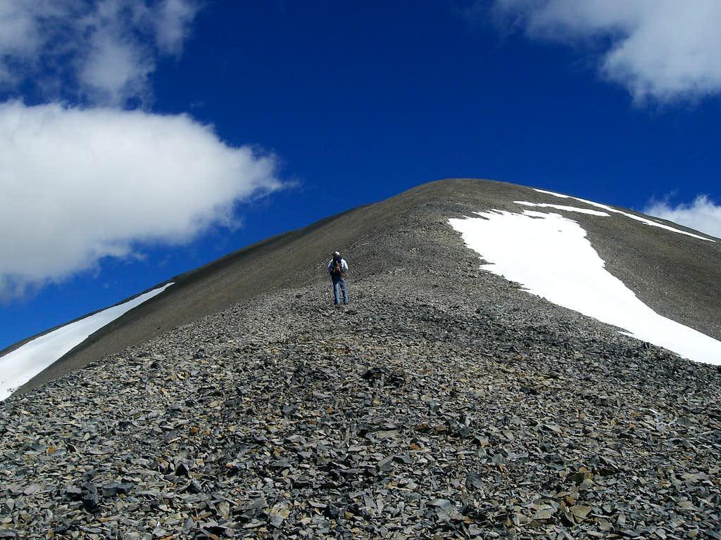 Climbing Redbird