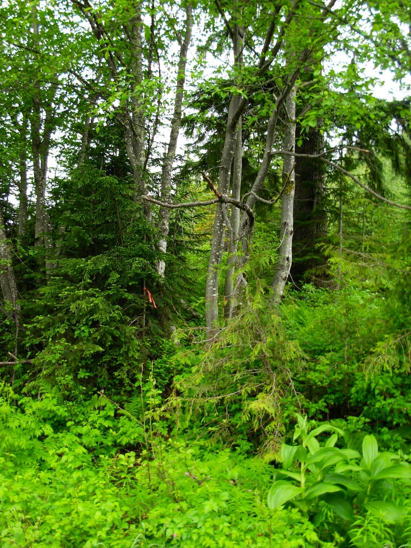 New Round Mountain Trail