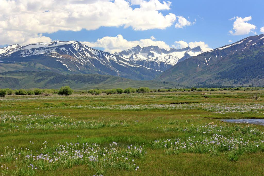 High Sierra from Bridgeport Valley
