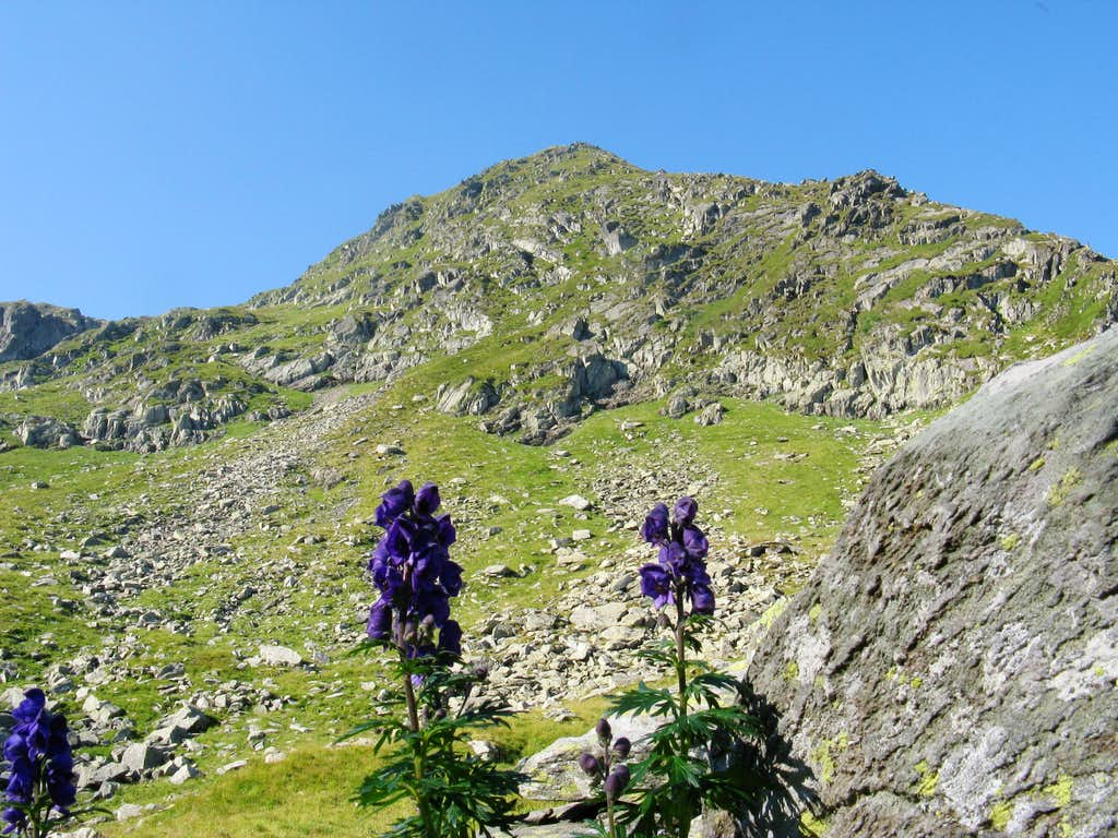 Aconite and Arpaşu Mic (2460m)