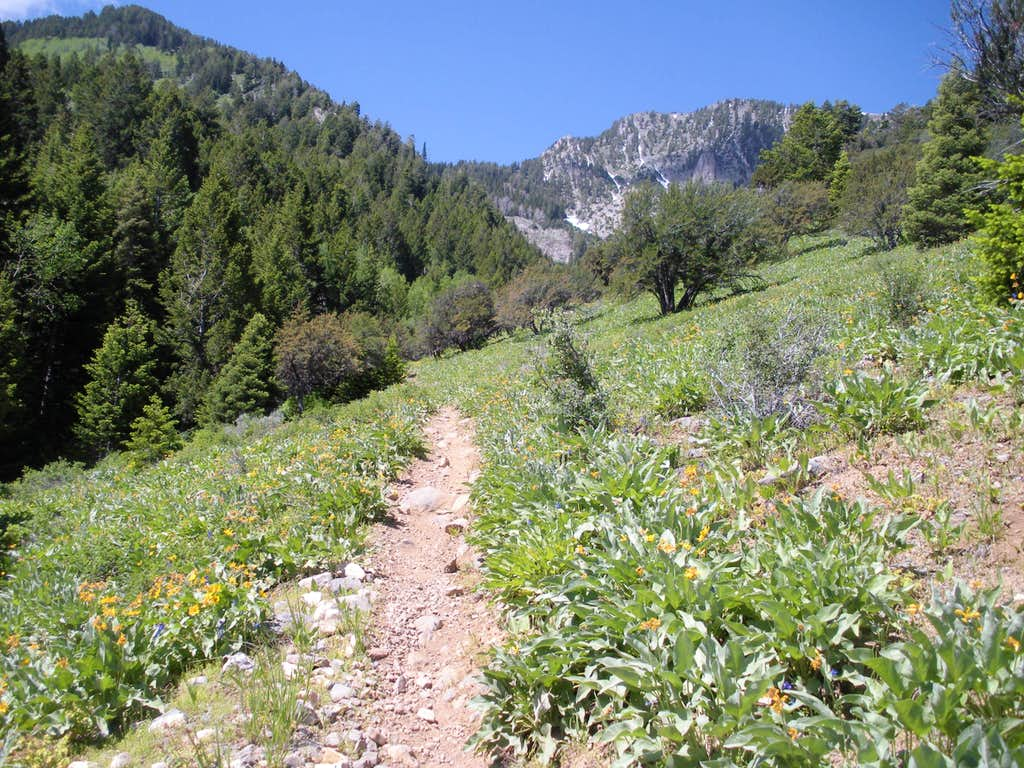 Stansbury Front Trail