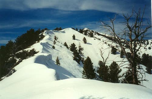 Vickory Peak Ridge