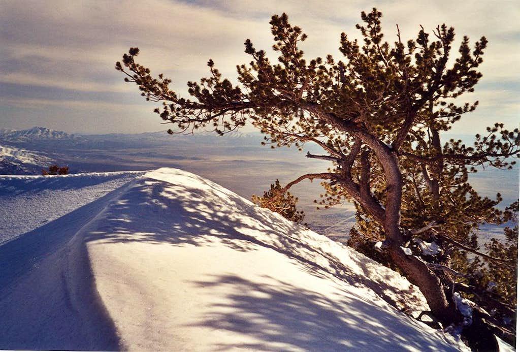 Tree on the ridge