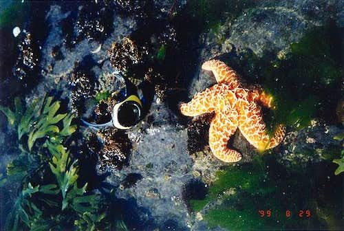 A starfish in the tidepools...