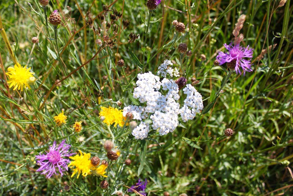 Wildflowers everywhere...