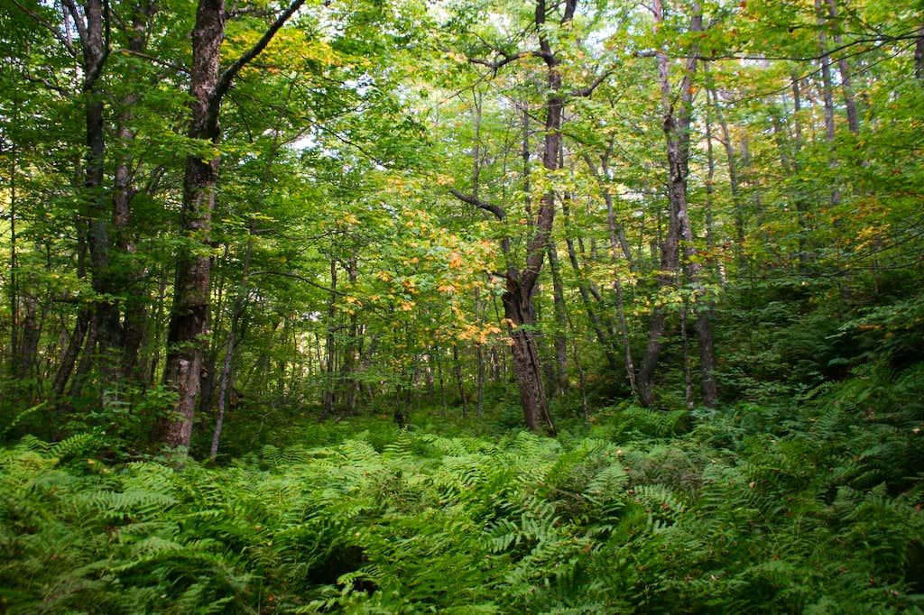 Mantle Trail Bushwhack