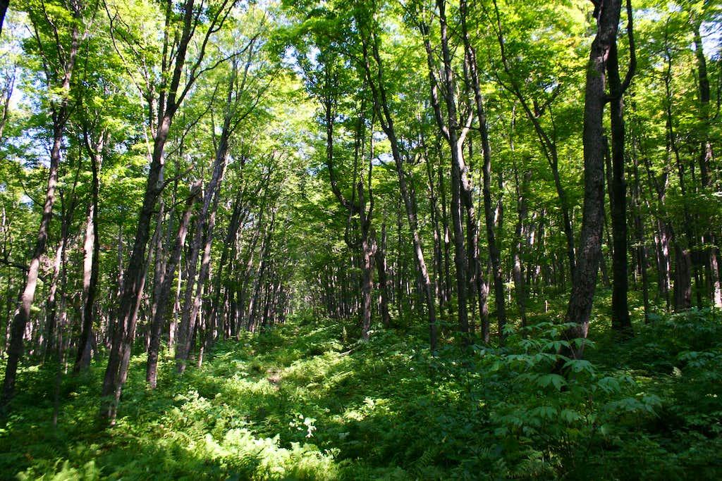 King Mountain Trail