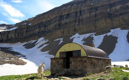 The Billy Goats are taking over Mt Timpanogos