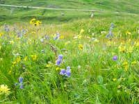 Petit Mont Cenis Flora III