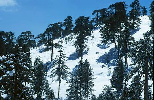Mount Olympos: The area is...