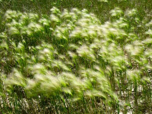 Prairie Winds...