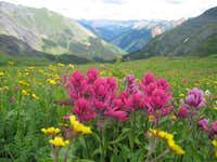 Flowers in Ice lake Basin...