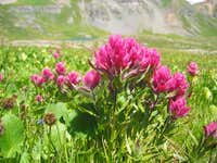 Flowers in Ice Lake Basin....