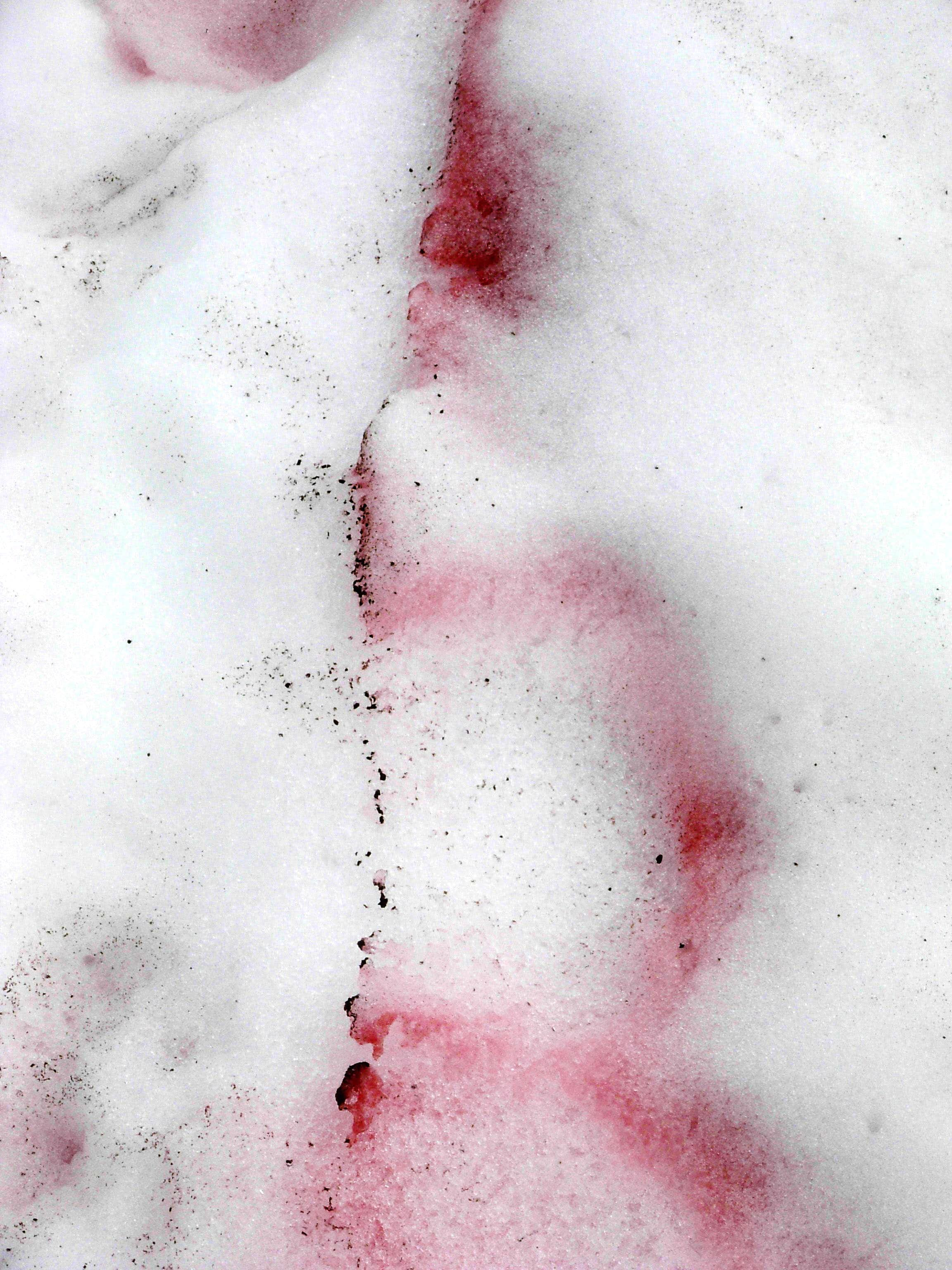 Exploring The Mystery Of Watermelon Snow