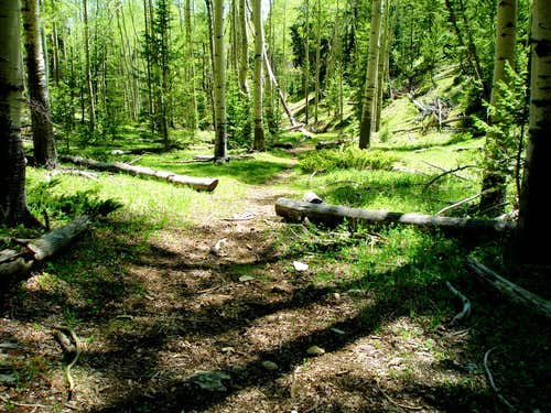 Lily Pad Lakes Trail