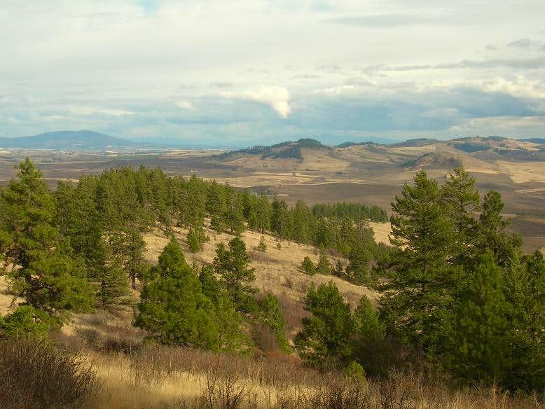 Pine Rige Loop Trail