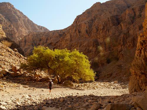 Wadi Naqab