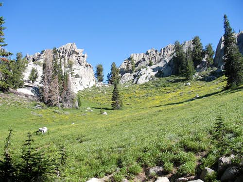 Wildflowers near Lone Peak