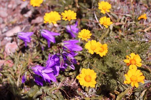 flora of Caucasus