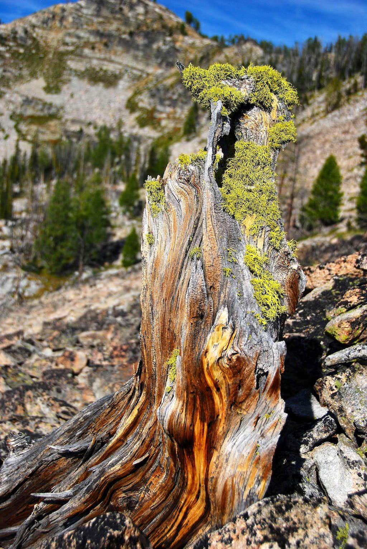 Lichen & Stump
