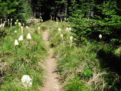 Beargrass On Stagman Ridge