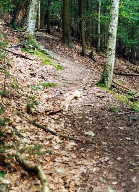 Turkey Path Trail