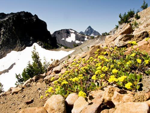Howlock, Thielsen & Flowers