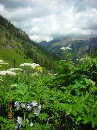 Flowers in Bridal Veil Basin