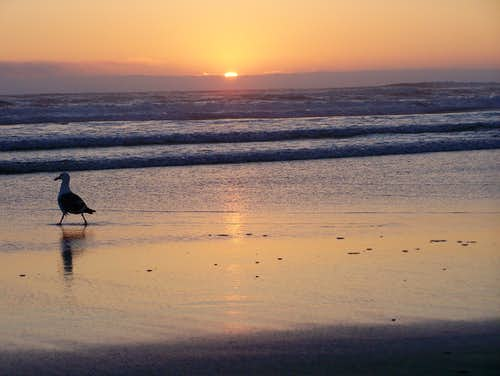 Orgeon Sunset with a Seagull
