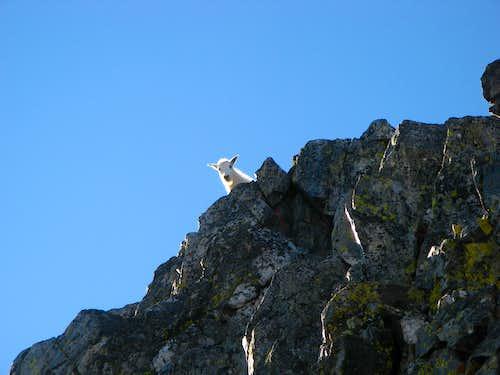 Quandary West Ridge