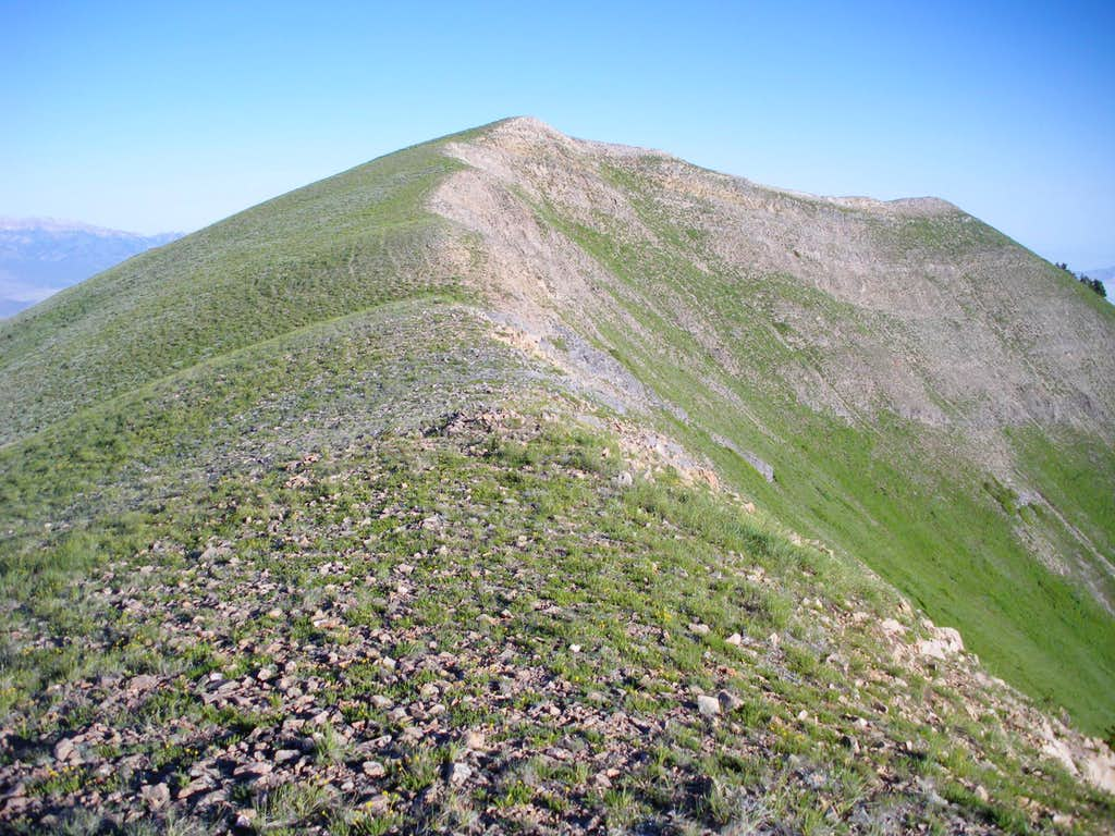 White Pine summit