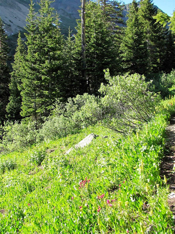 On Tabor Creek Trail Photos Diagrams Amp Topos Summitpost