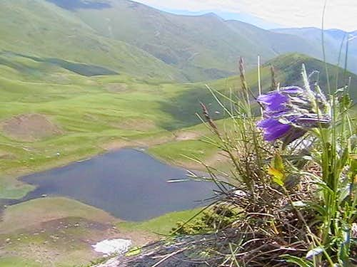 Campanula and Dohiaska lake (Svydovets - Ukraine)