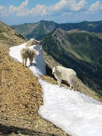Fellow mountaineers