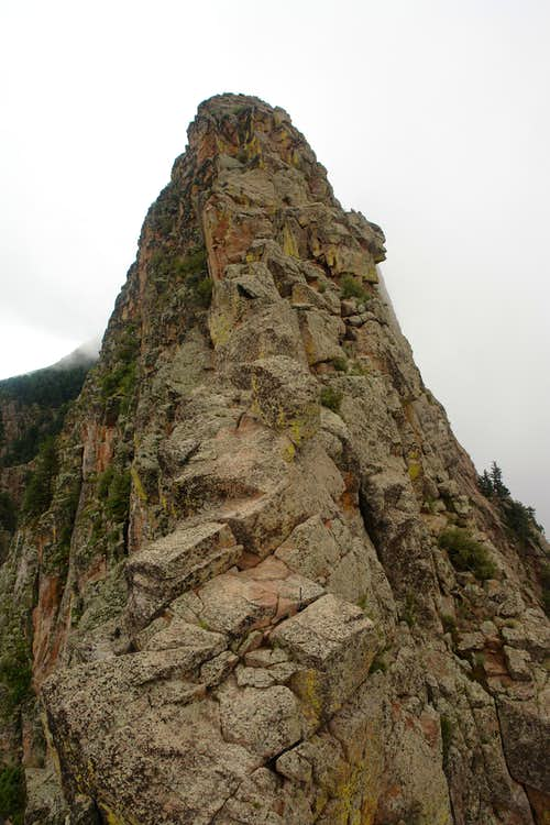The upper part of the  W  notch