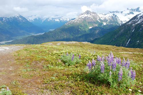Harding Ice Field Trail, Juneau AK