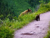 Trail Closers