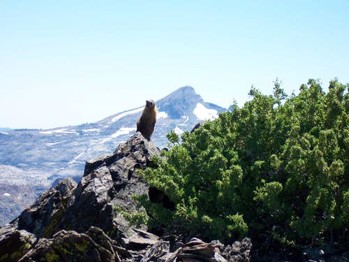 Pyramid Peak and a curious Marmot
