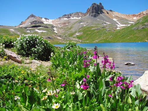Ice Lake wildflowers