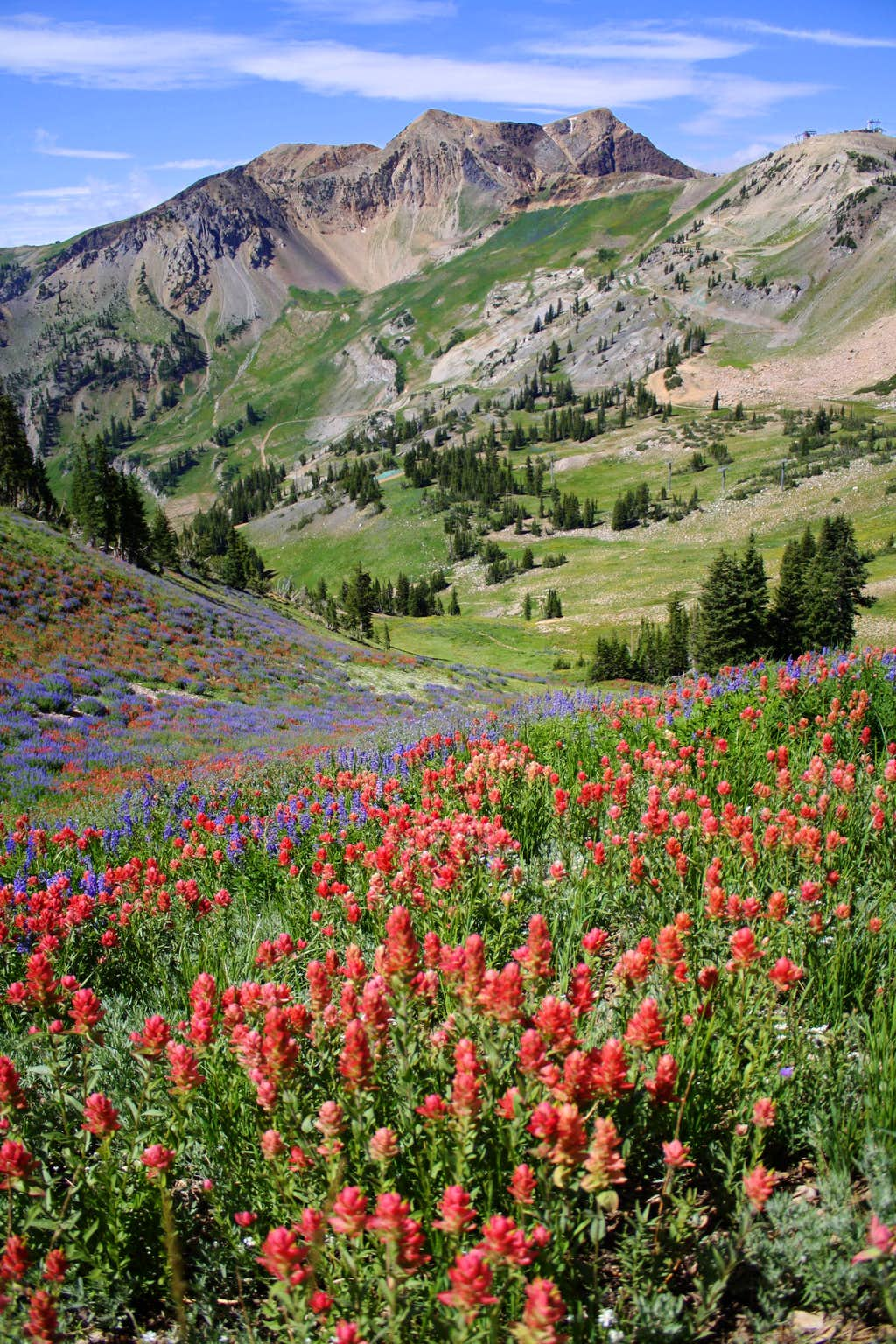 A field of Indian Paintbrush and the American Fork Twins