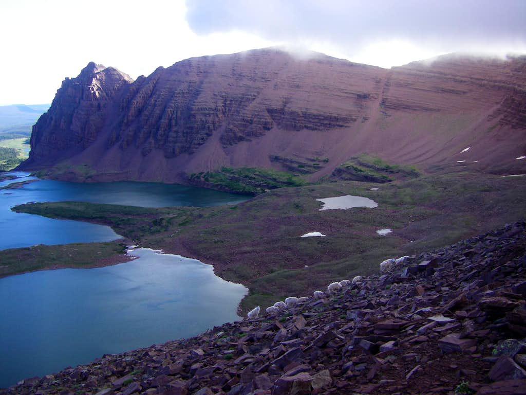 Mountain goats veiwed from west ridge