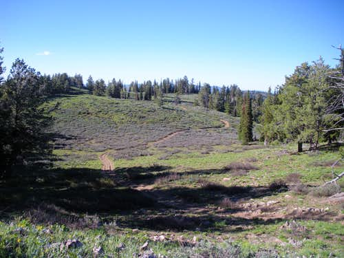 Summit meadow from top