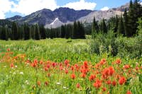 Indian Paintbrush and Devil s Castle
