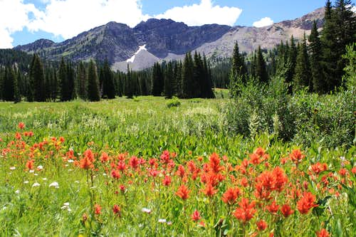 Indian Paintbrush and Devil\'s Castle