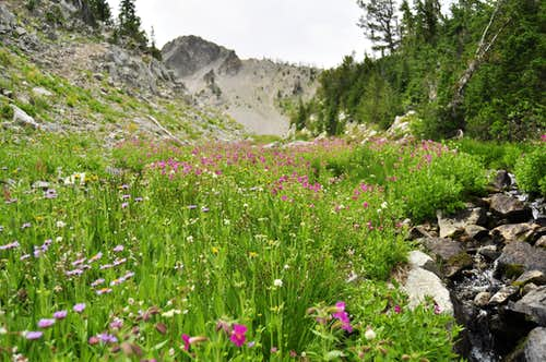 Wildflower Gully
