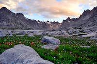 Wildflowers in Titcomb Basin