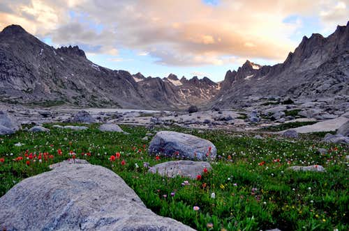 Wildflowers in Titcomb Basin