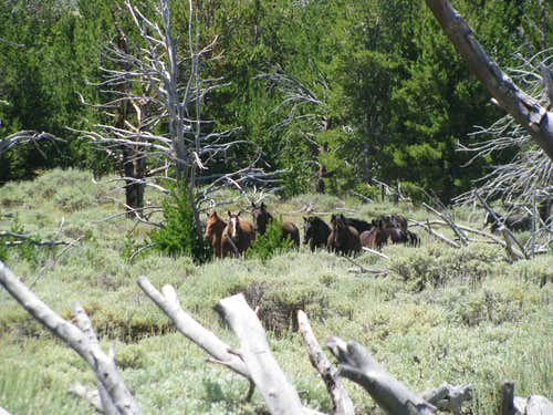 Wild horses below Whiskey Peak