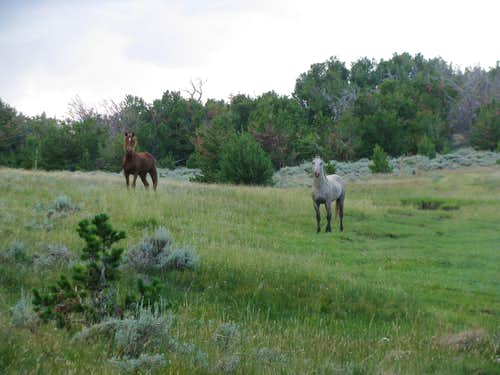 Wild horses on Whiskey Peak