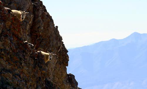 Seeing doulble on Box Elder Peak